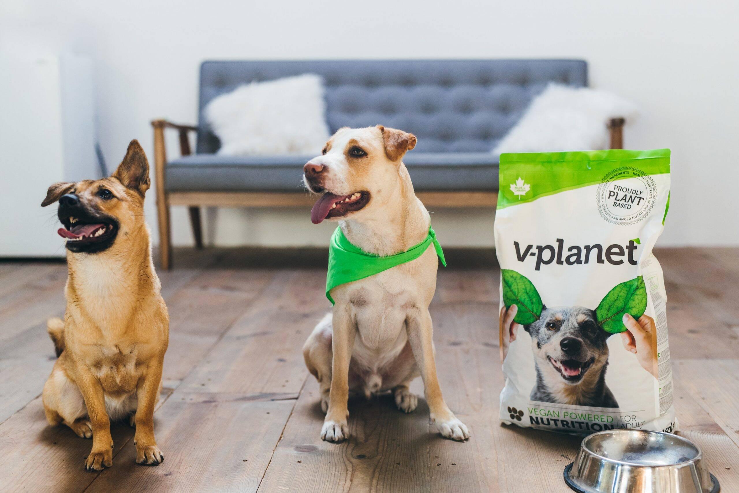 Empresa desenvolve ração vegana para cães