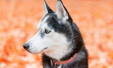 DNA de cães pré-históricos revela a longa amizade com humanos