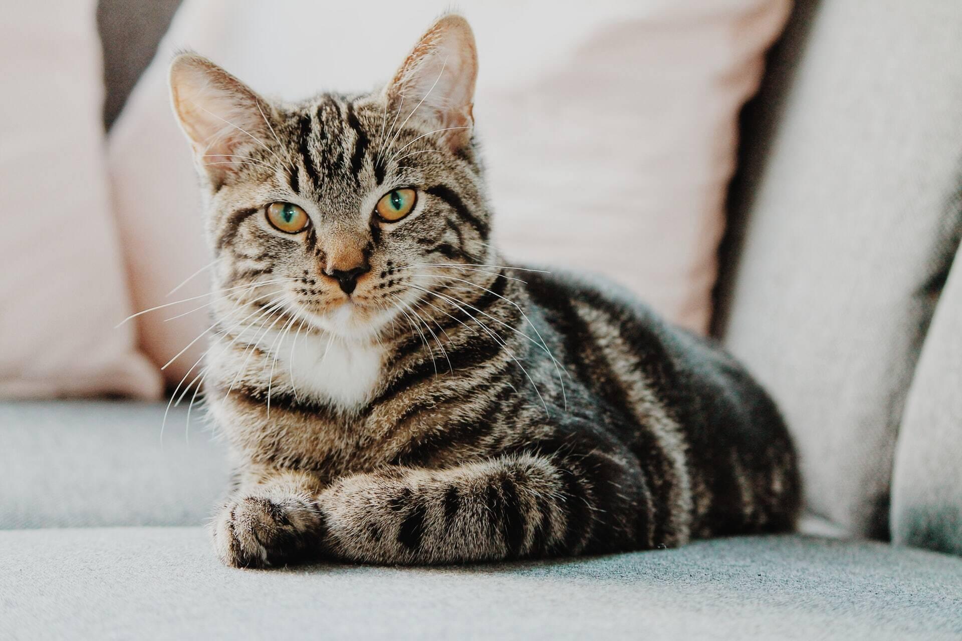 Mulher adota gatos e resolve o problema de pestes em casa