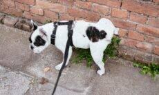 5 produtos que vão ajudar seu cão a fazer xixi no lugar certo
