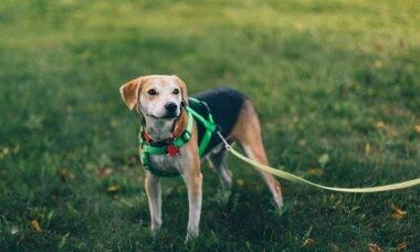 Aprenda a passear do jeito certo e combata a ansiedade do seu cão
