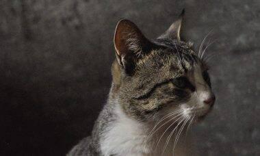Conheça os gatos que sobreviveram ao terremoto na Turquia