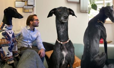 Conheça o cão com um pescoço semelhante ao das girafas