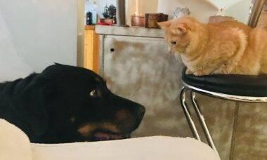 Cães ou gatos? Sua preferência diz muito a respeito de você