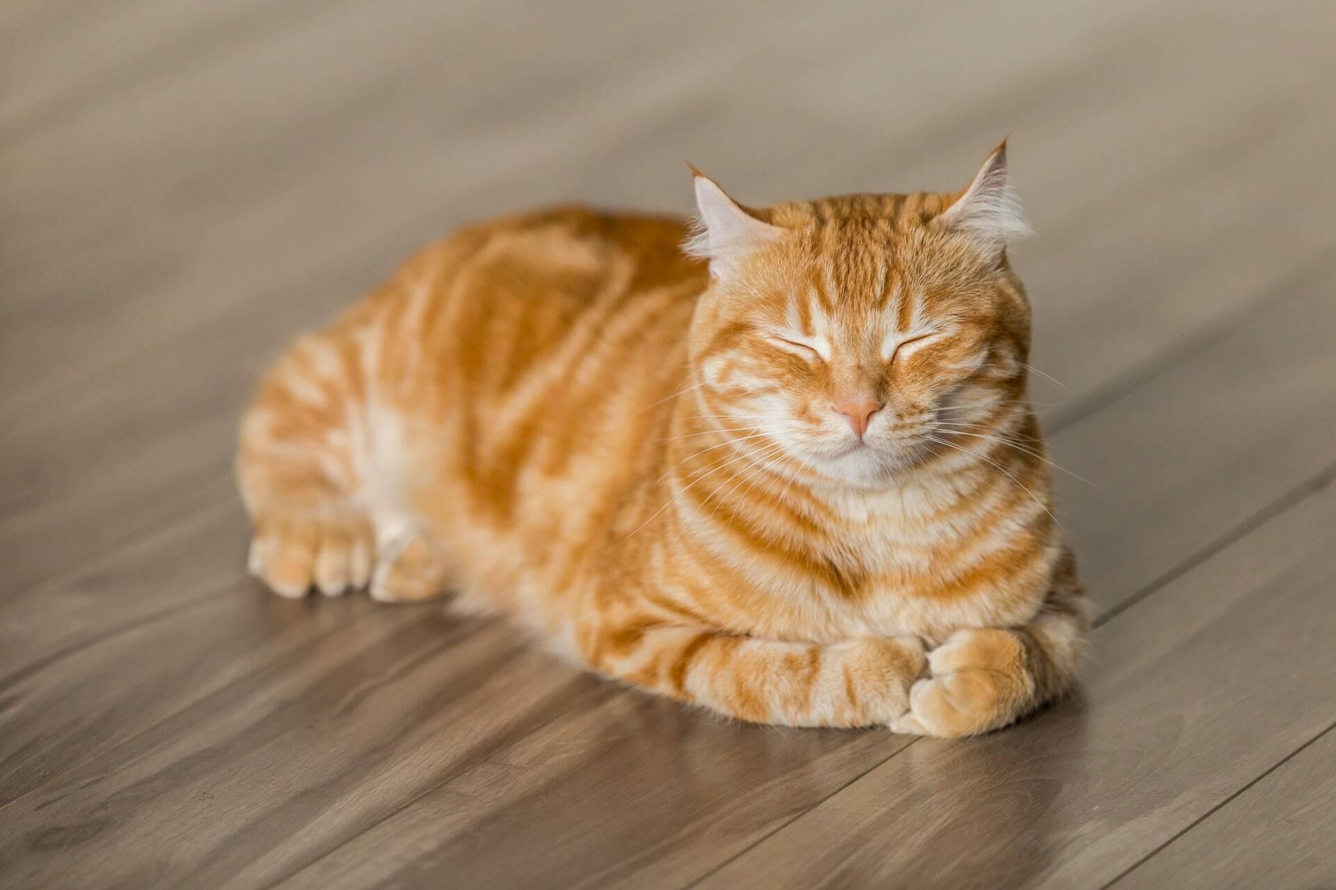 8 sinais de que você precisa correr com seu gato ao veterinário