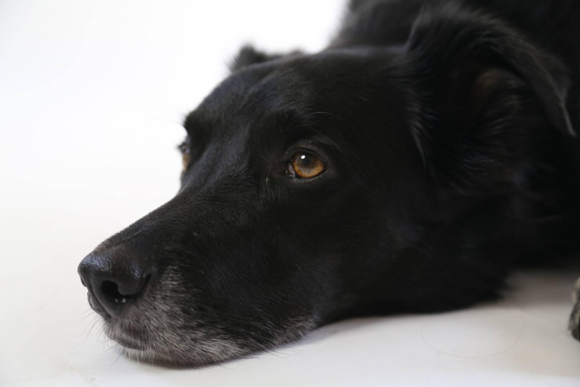 Cães adoecem após comer maconha em gramados de cidade no Reino Unido