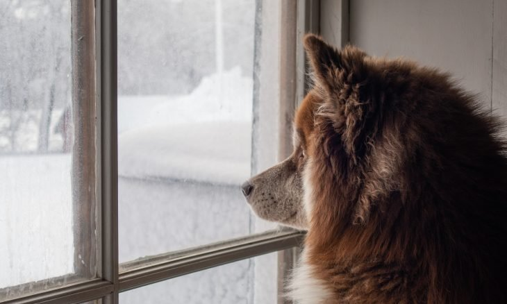 50% dos donos acreditam que seus cães têm ansiedade de separação, diz estudo