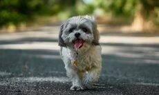 Como os cães descobrem o caminho de casa? A ciência tenta responder