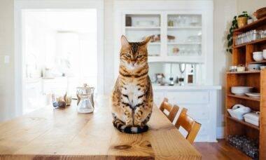 Proteja a casa contra os hábitos destrutivos dos gatos