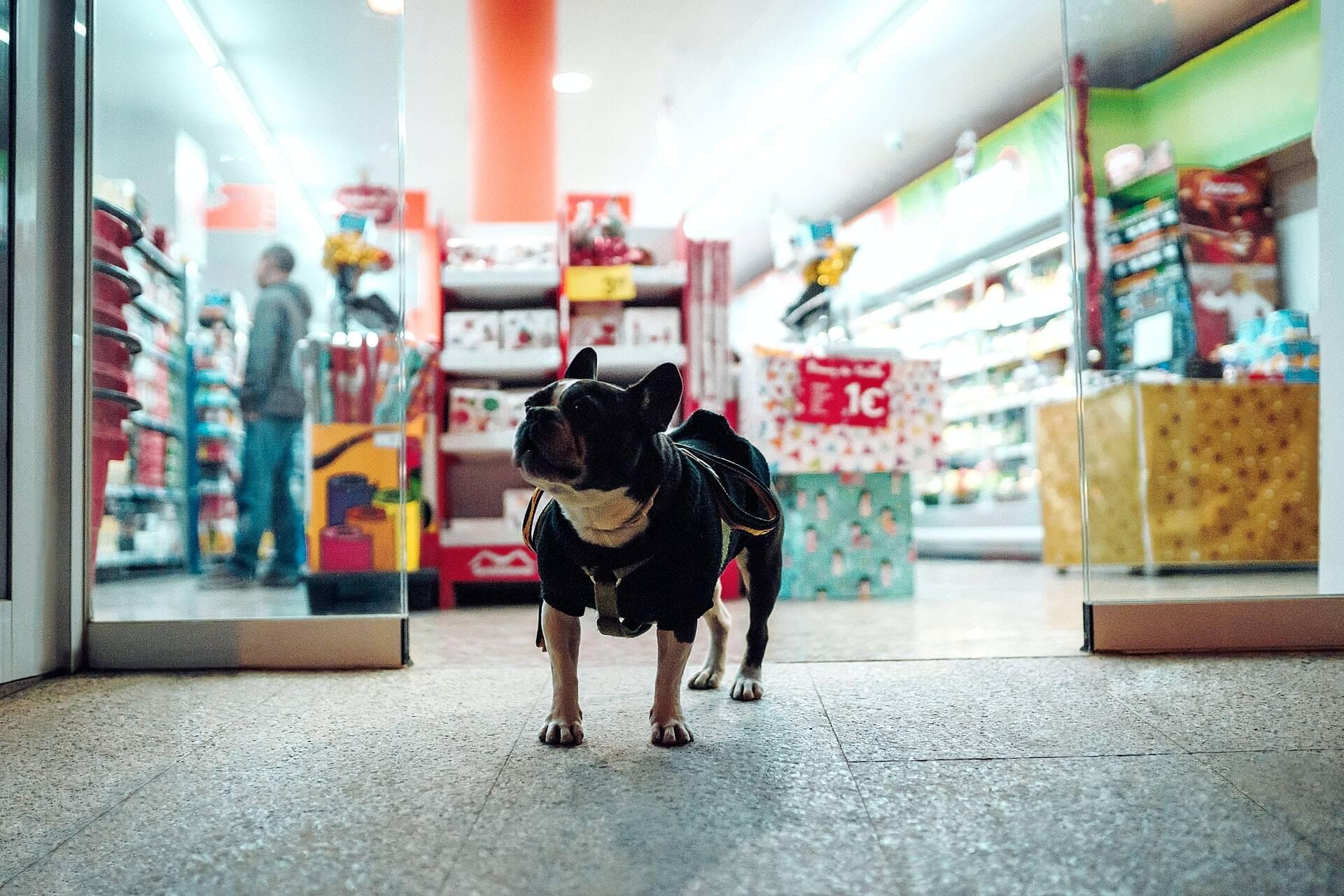 Black Friday: Petshop oferece descontos durante todo o mês de novembro