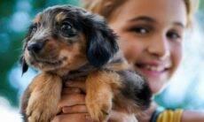 7 coisas que os pais têm de saber antes de adotar um cão para seus filhos