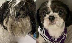 Fotos registram mudanças surpreendentes em cães de abrigo