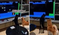 Vídeo mostra cães 'viciados' no game Super Mario