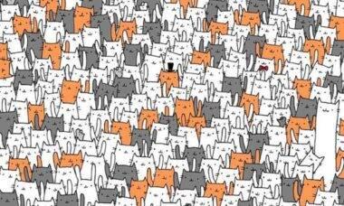 Você consegue encontrar o coelho no meio de um monte de gatos? Faça o teste