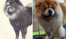 Fotos mostram como algumas raças de cães mudaram ao longo da história