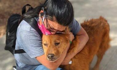 Graças a microchip, dona reencontra cão desaparecido havia 7 anos