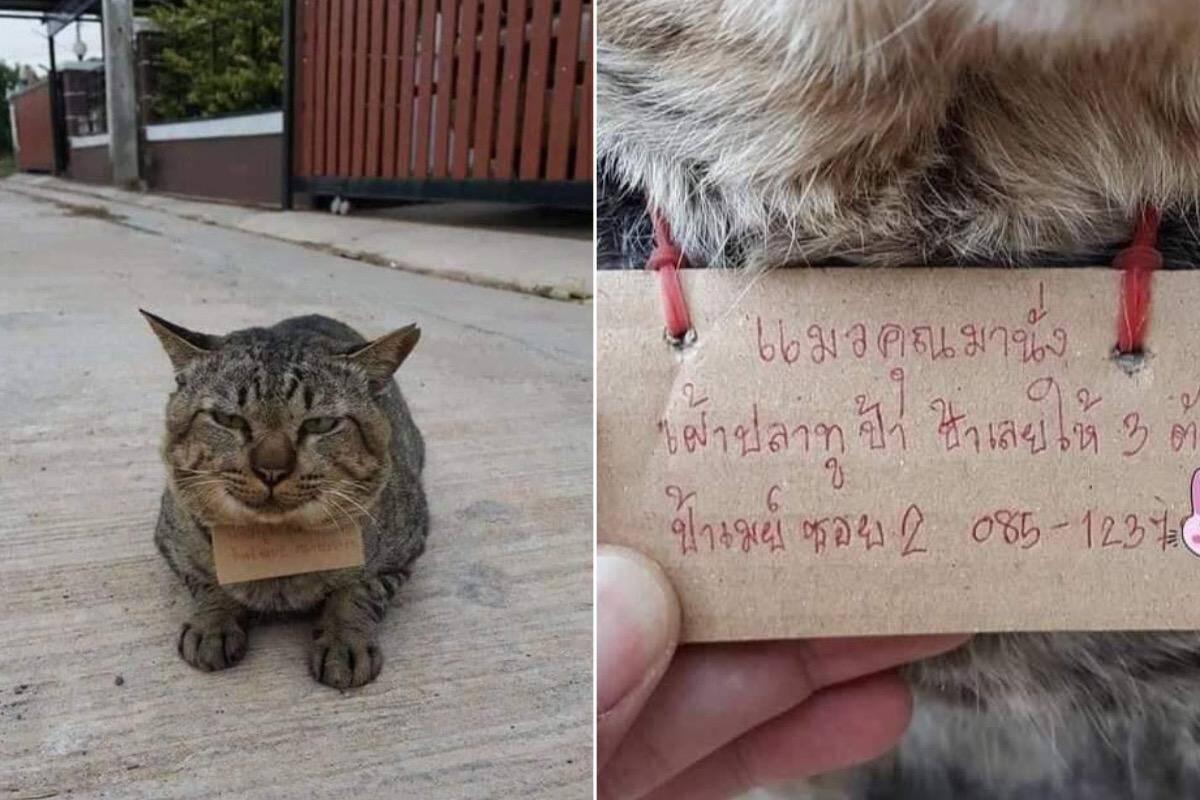 Gato desaparecido volta pra casa com uma conta por três peixes consumidos
