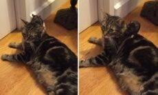 Vídeo: Quem disse que gatos e ratos não podem ser melhores amigos?