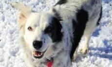 Conheça os cães que deram sua vida em nome da ciência