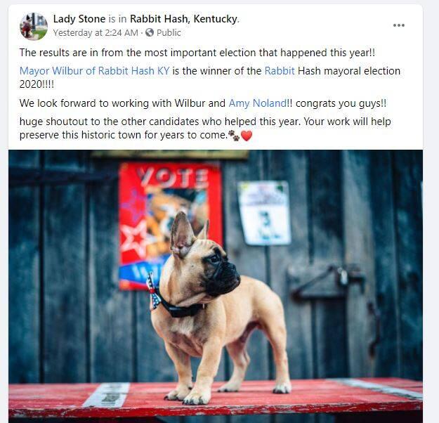 Buldogue francês ganha eleição para prefeito em cidade no Kentucky