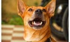 Cuidado: O mau hálito do seu cão pode ser indício de problemas bem piores