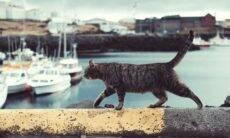 Gato volta pra casa após oito anos desaparecido