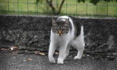 Saiba como controlar o instinto assassino do seu gato