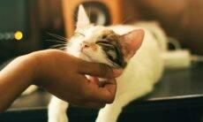 13 coisas que você jamais deve fazer com um gato, segundo especialistas