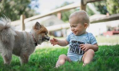 Aprenda a escolher o cão certo para conviver com o seu bebê