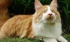 Gato terapeuta cego ganha medalha por ajudar pacientes em hospício