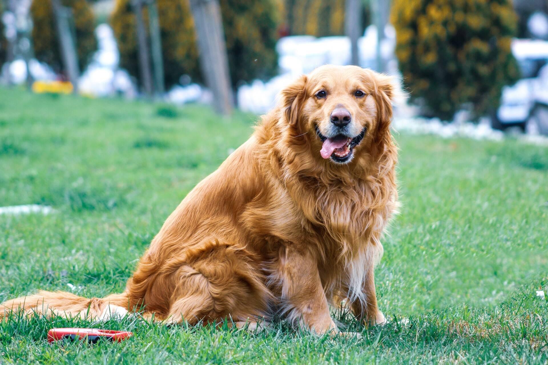 As 6 melhores raças de cães para quem quer um bicho feliz em casa