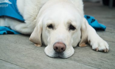 Sem donos por perto, cães ficam muito mais estressados nas consultas com o veterinário
