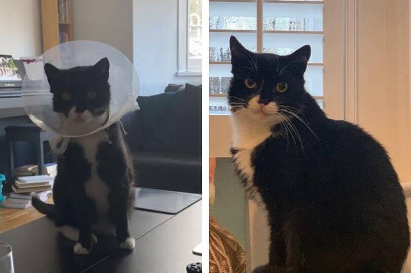 Gato aparece para passar o Natal em casa, exatos 4 anos após ter desaparecido