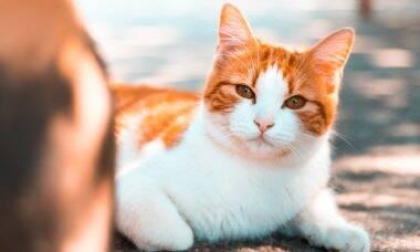 9 dicas para fazer uma mudança sem estressar seu gato