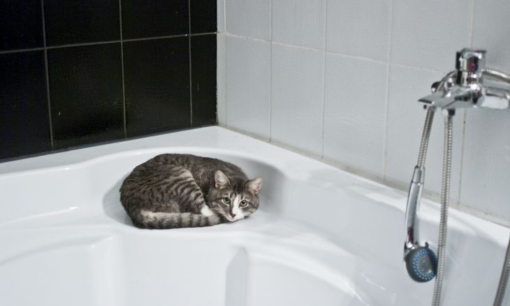 Saiba o jeito certo de dar banho no seu gato e sobreviver a isso