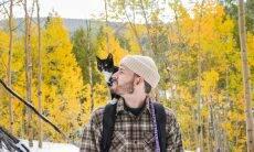 Estudo mostra que gatos amam seus donos muito mais do que imaginávamos
