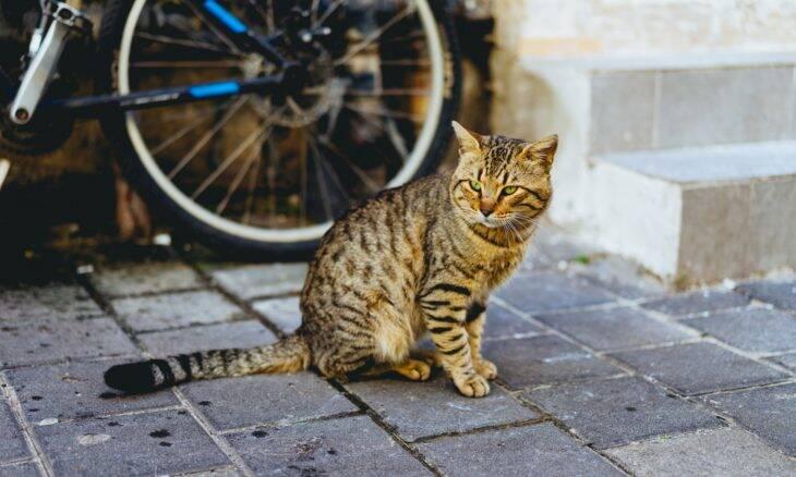 Saiba o que fazer caso um gato de rua 'adote' você