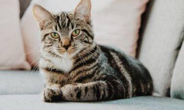 Saiba o que todo dono de gato deve ter em casa