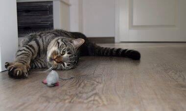 Saiba como exercitar o seu gato brincando
