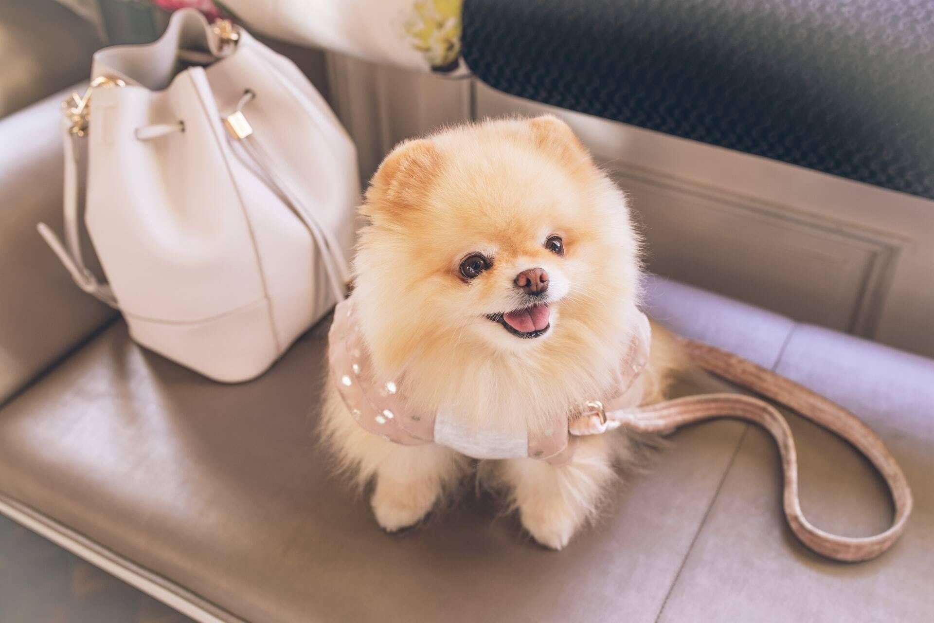 Pensando em adicionar um cão de companhia à sua família? Uma dessas raças de cães pequenos pode ser a combinação perfeita.