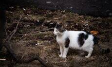 Gato resgatado no lixo é nomeado vice-ministro do Ambiente na Rússia
