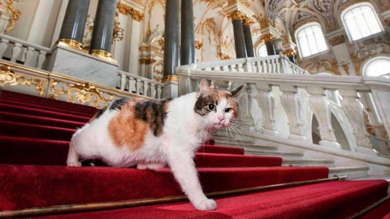 Milionário francês deixa herança para gatos que moram em museu russo