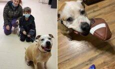 Cão furtado volta pra casa depois de 8 anos desaparecido