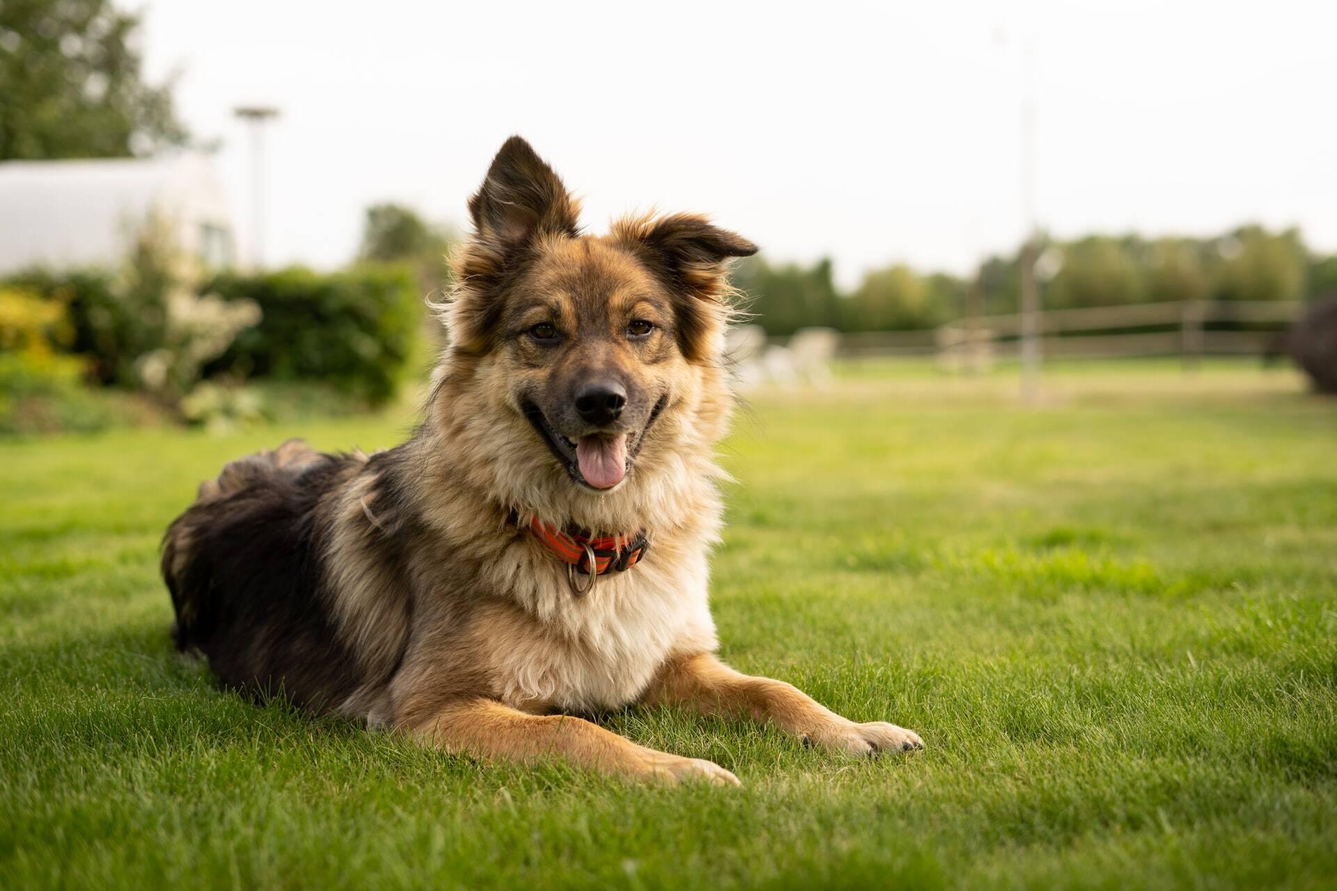 4 dicas que acrescentam mais anos à vida do seu cão