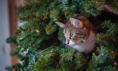 Vídeos mostram gatos que odeiam árvores de Natal