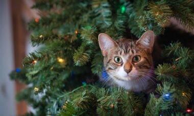 Saiba como proteger a árvore de Natal contra ataques do seu gato