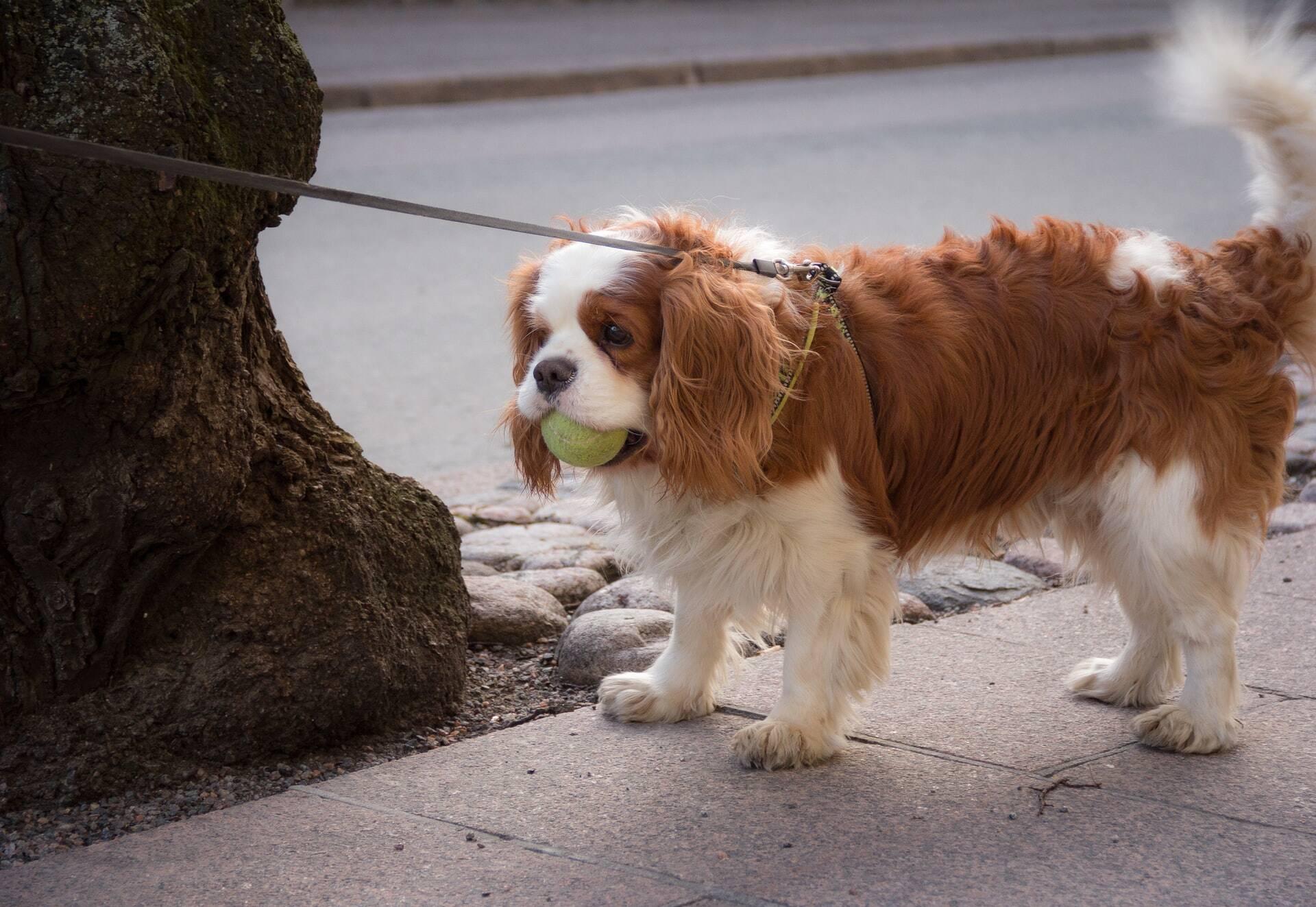 Sofre com alergia? Confira as dez raças de cães que você deve evitar