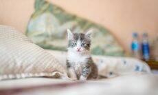 5 coisas que você deve saber antes de levar um filhote de gato pra casa