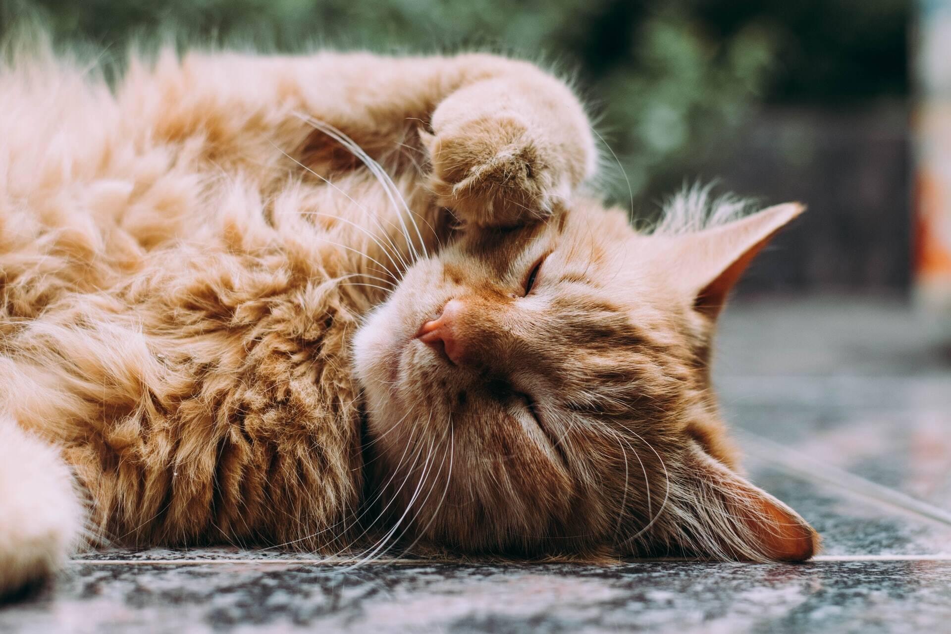 4 maneiras de tornar a sua casa menos alérgica para gatos