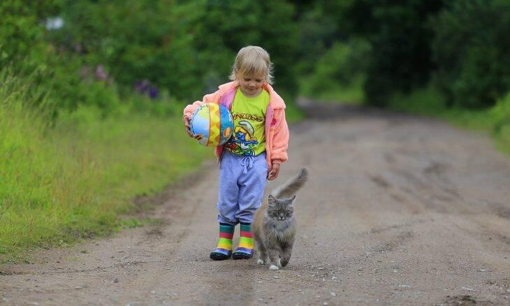 Gatos ajudam no tratamento de crianças com autismo, indica estudo